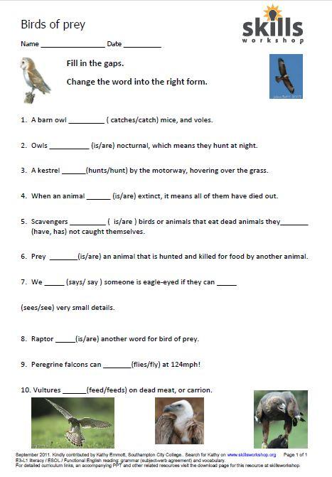 birds of prey grammar and vocabulary resources